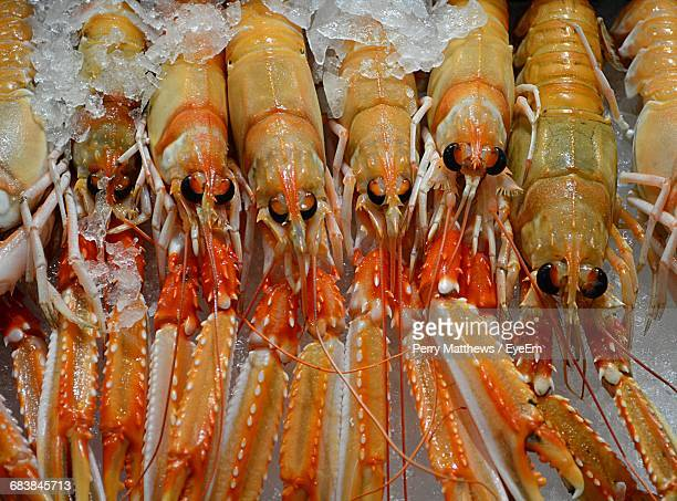 Close-Up Of Lobsters For Sale