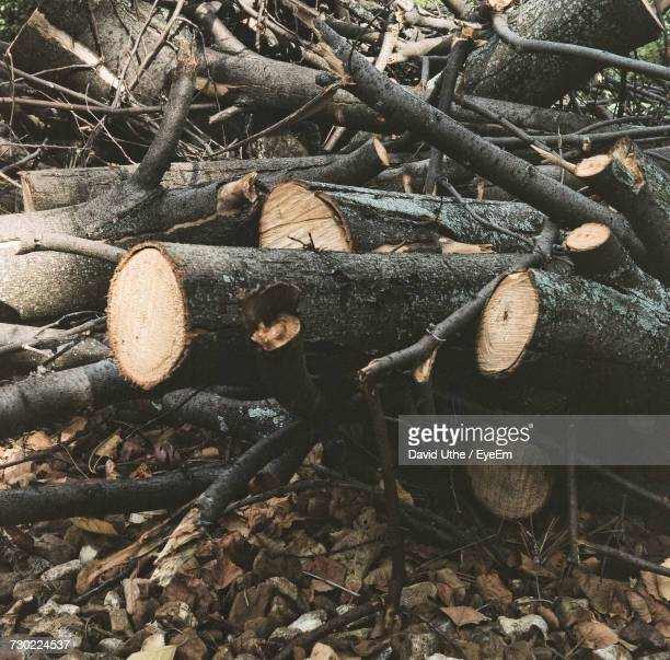 Close-Up Of Logs On Tree Trunk In Forest
