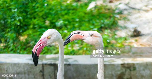 close-up of long neck birds - long neck animals stock pictures, royalty-free photos & images