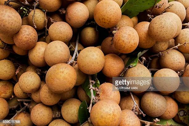 Closeup of longan fruits