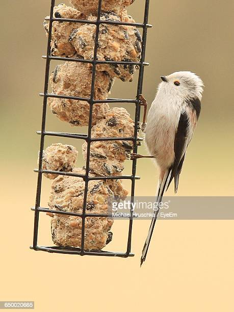 close-up of long-tailed tit on bird feeder - michael hruschka stock pictures, royalty-free photos & images