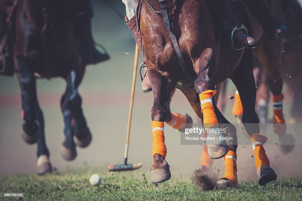 Close-Up Of Low Section Of Horse And Polo Player : Stock-Foto