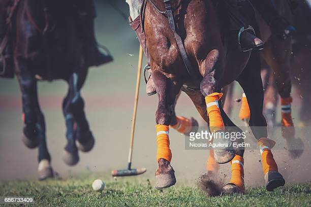 close-up of low section of horse and polo player - polo stock pictures, royalty-free photos & images