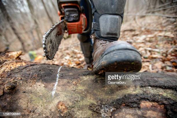 close-up of lumberjack about to saw a log marked with chalk - toughness stock pictures, royalty-free photos & images