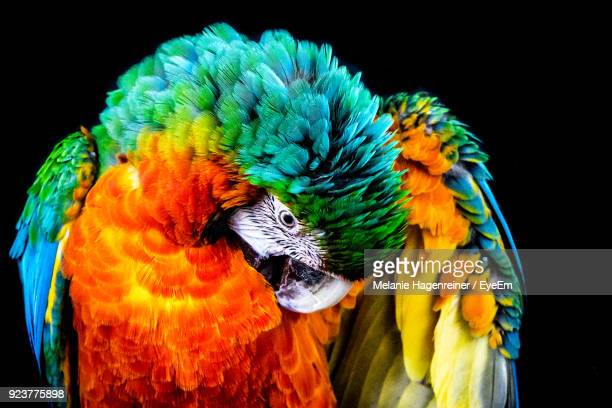 close-up of macaw against black background - bontgekleurd stockfoto's en -beelden