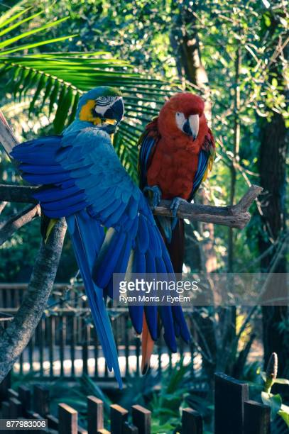 Close-Up Of Macaw Birds Perching On Tree