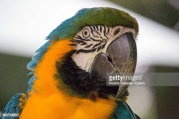 Close-Up Of Macaw