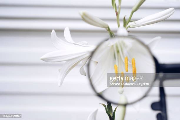 Close-Up Of Magnifying Glass Against White Flower