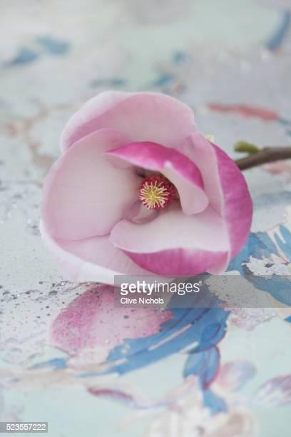 Close-up of magnolia flower