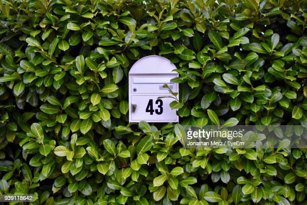 close-up of mailbox amidst plants - mailbox stock pictures, royalty-free photos & images