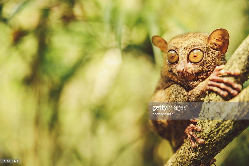 Close-Up Of Mammal On Tree : Stock Photo