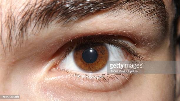 close-up of man eyes - braune augen stock-fotos und bilder