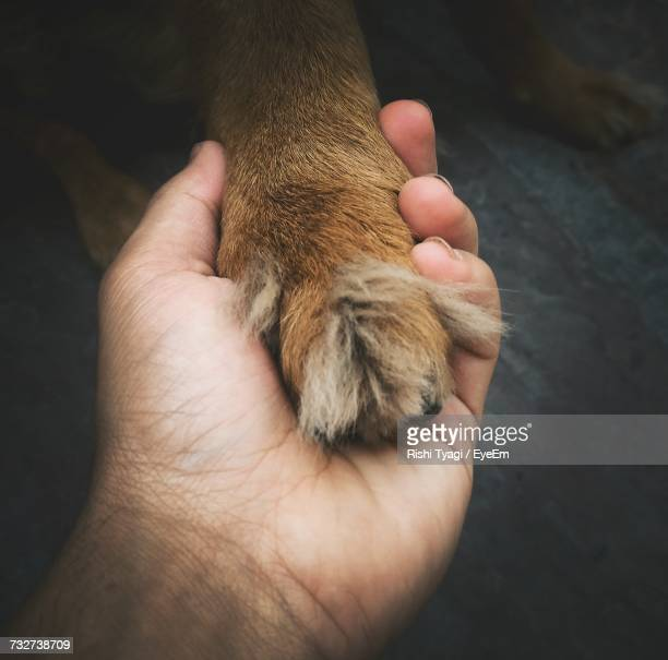Close-Up Of Man Hand And Dog Paw