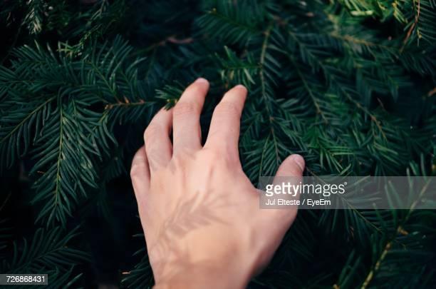close-up of man hand on tree - jul photos et images de collection
