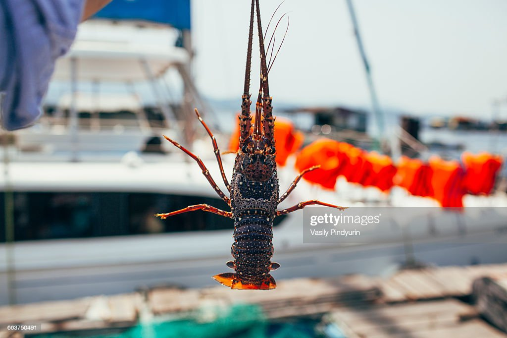 Close-up of man holding lobster outdoors : Stock Photo