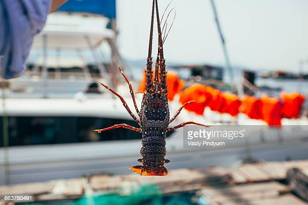 Close-up of man holding lobster outdoors