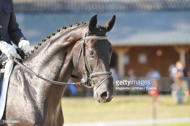 close-up of man standing on field - thoroughbred horse stock pictures, royalty-free photos & images