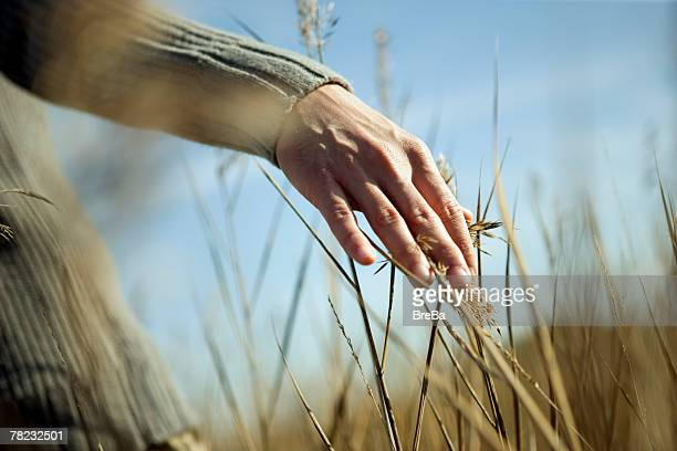 close-up of man touching reeds in field