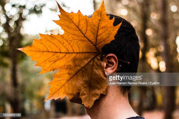 Close-Up Of Man Wearing Maple Leaf On Ear During Autumn