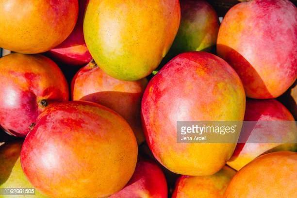 closeup of mangoes, mango fruit, tropical fruit - mango stock-fotos und bilder