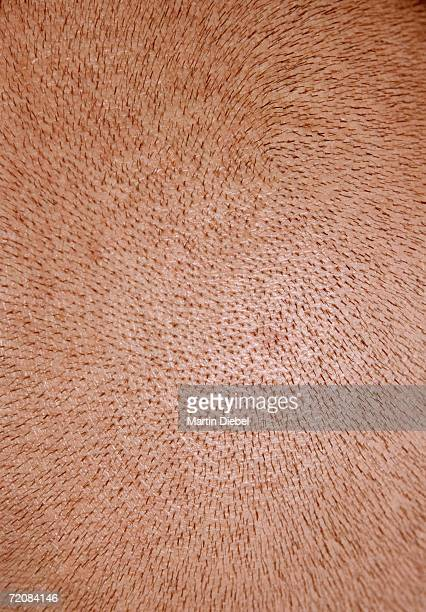 close-up of man?s shaved head - stubble stock pictures, royalty-free photos & images