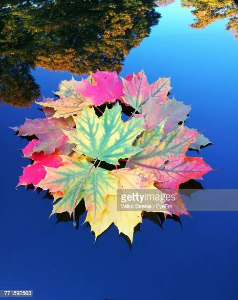 Close-Up Of Maple Leaf Against Blue Sky