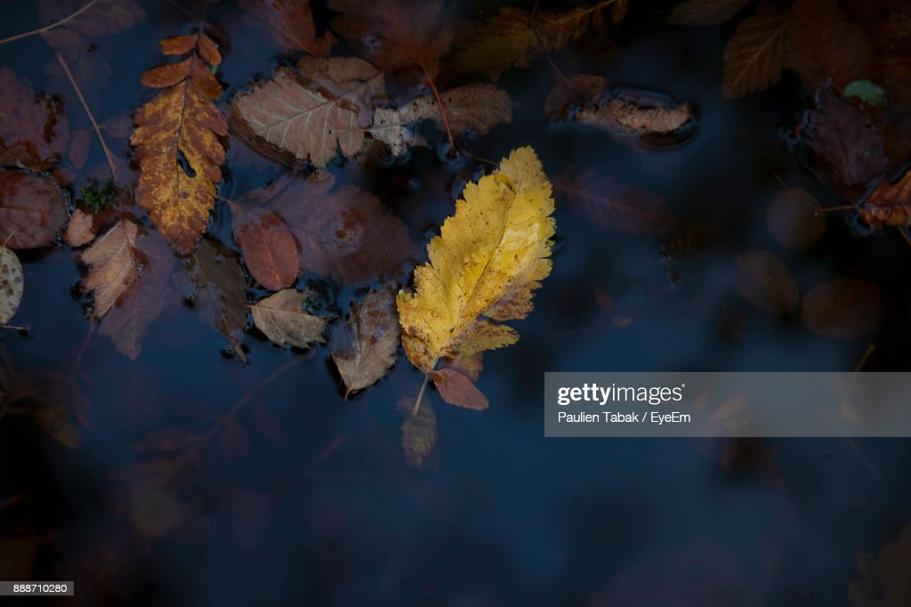 Close-Up Of Maple Leaf During Autumn : Stockfoto