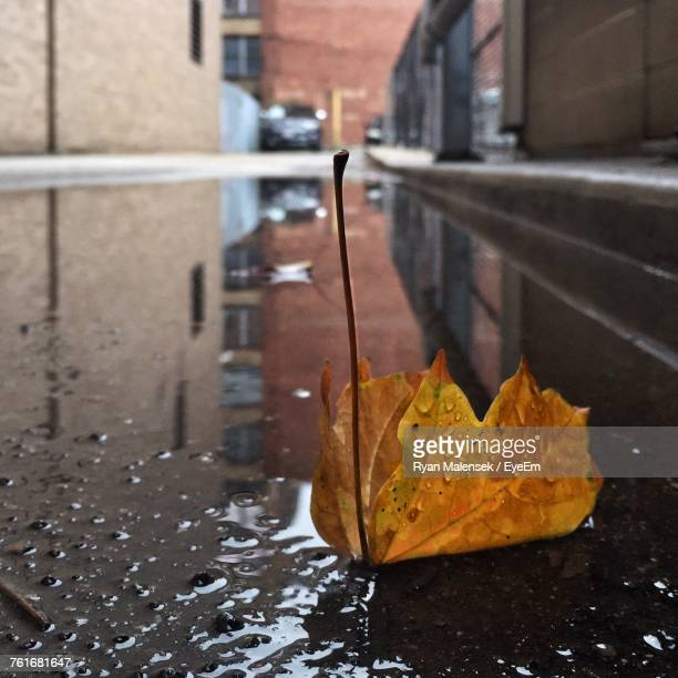 Close-Up Of Maple Leaf On Wet Street