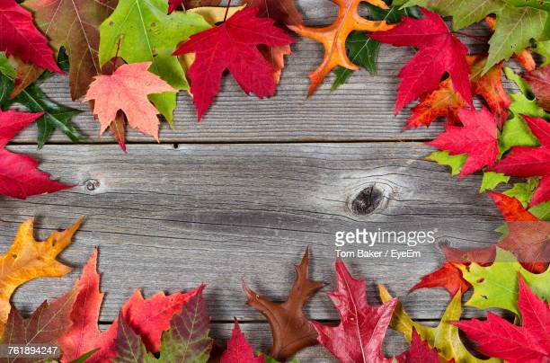 close-up of maple leaves on wood - fall background stock photos and pictures