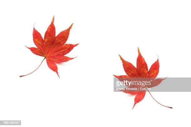 close-up of maple leaves - maple leaf stock pictures, royalty-free photos & images