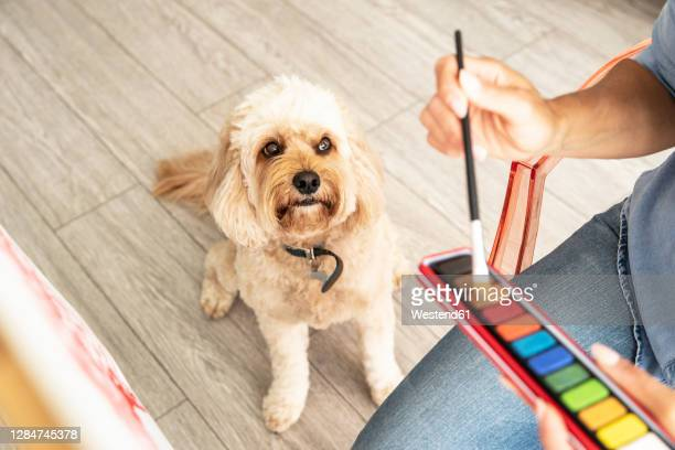 close-up of mature woman sitting with dog while painting on canvas at home - artist stock pictures, royalty-free photos & images