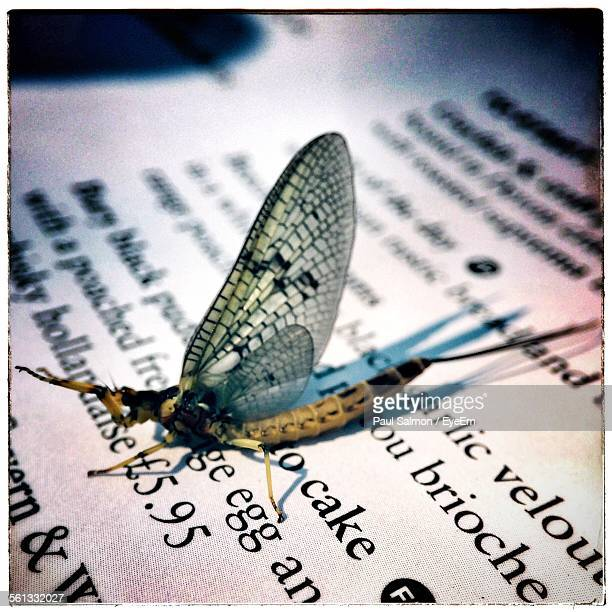 close-up of mayfly on paper - mayfly stock pictures, royalty-free photos & images