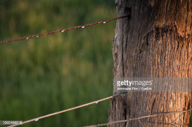 Close-Up Of Metallic Fence On Tree Trunk