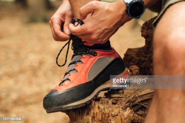 close-up of mid adult man tying shoelace on wood in forest - tying shoelace stock pictures, royalty-free photos & images