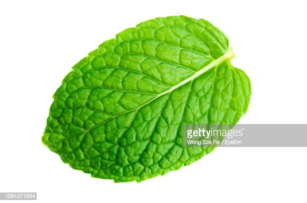 close-up of mint leaf against white background - ミント ストックフォトと画像