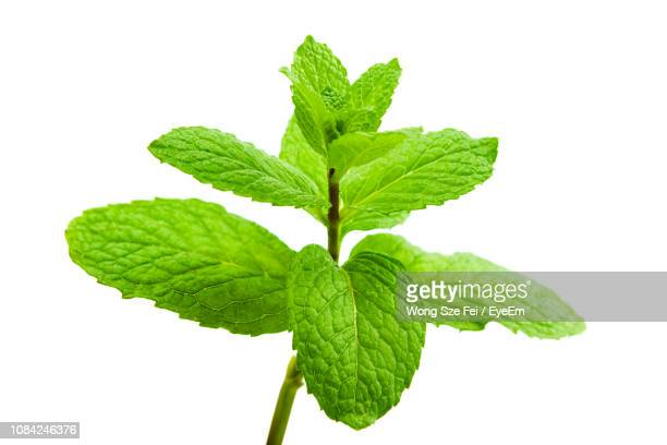 close-up of mint leaves against white background - ミント ストックフォトと画像