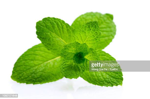 close-up of mint leaves against white background - mint leaf stock photos and pictures