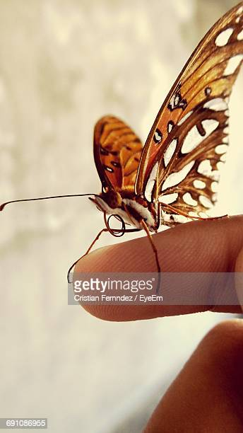 Close-Up Of Monarch Butterfly On Finger