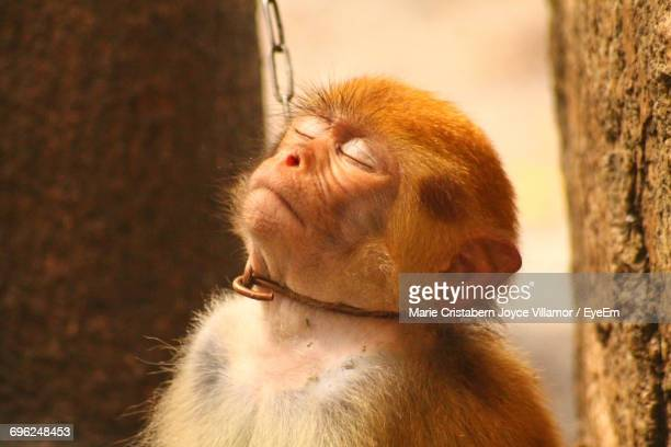 close-up of monkey in captivity - dierenwelzijn stockfoto's en -beelden