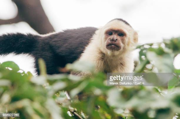close-up of monkey on tree - marek stefunko stock photos and pictures