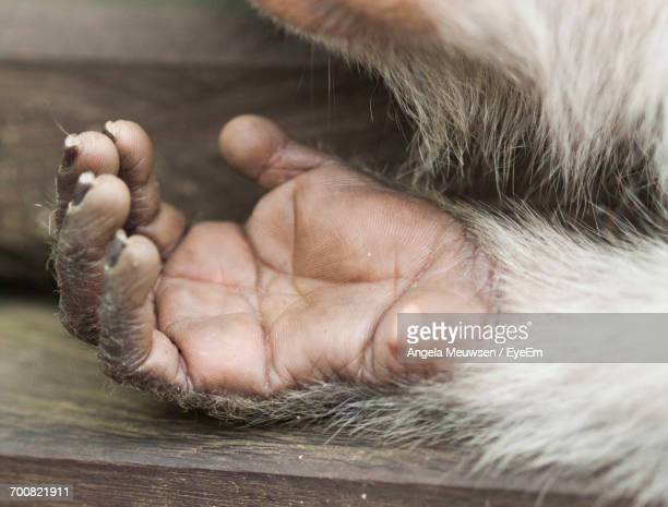 Close-Up Of Monkey Paw