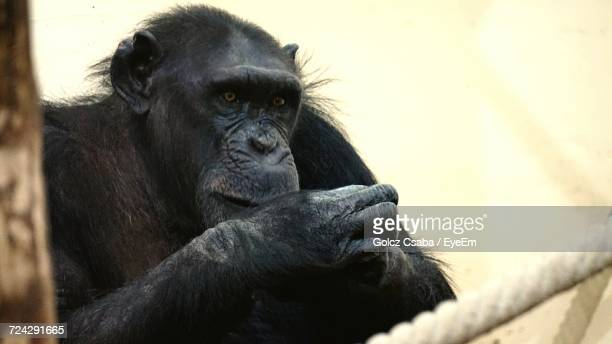 close-up of monkey - gorilla hand stock photos and pictures
