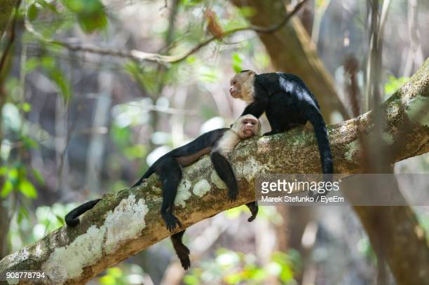 close-up of monkey sitting on branch - marek stefunko - fotografias e filmes do acervo