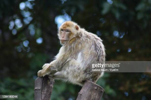 close-up of monkey sitting on tree - baum stock pictures, royalty-free photos & images
