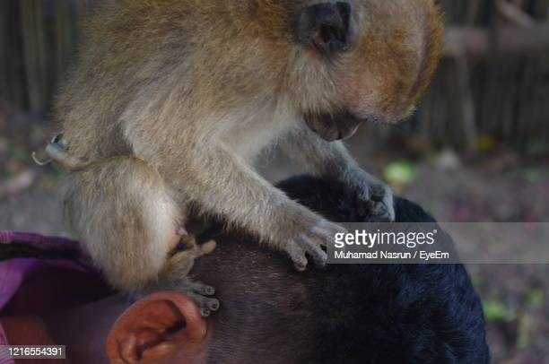 close-up of monkey sitting outdoors - muhamad nasrun stock pictures, royalty-free photos & images
