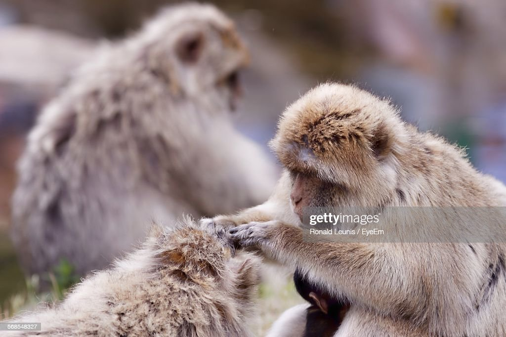 Close-Up Of Monkeys In Forest : Stock Photo