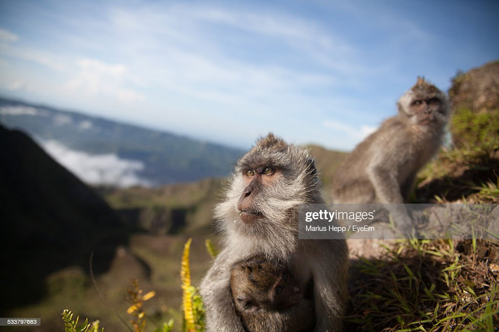 Close-Up Of Monkeys On Mountain Against Sky : Foto stock