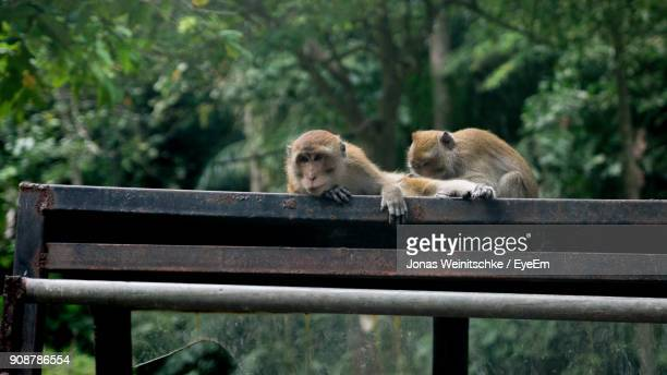 Close-Up Of Monkeys On Railing Against Trees
