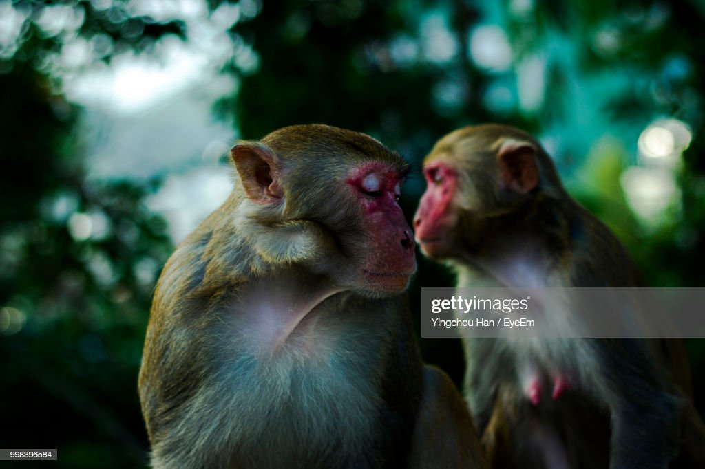 Close-Up Of Monkeys : Stock Photo