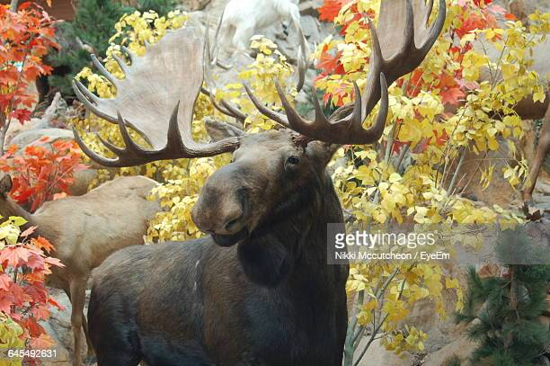 Close-Up Of Moose Against Tree